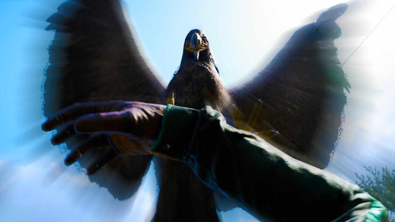 far cry eagles