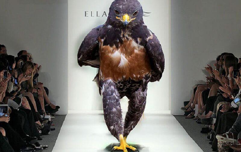funny-hawk-photoshop-battle-58-57f1fdbfc27dc__700