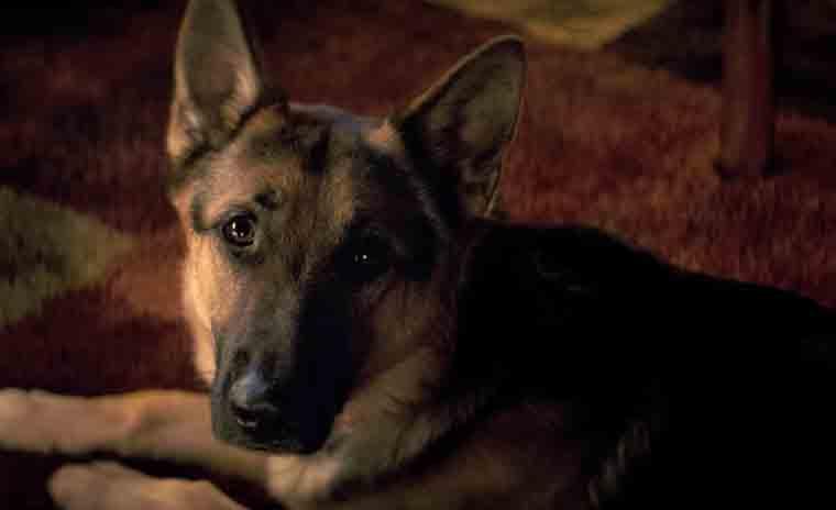 a dogs life animal abuse