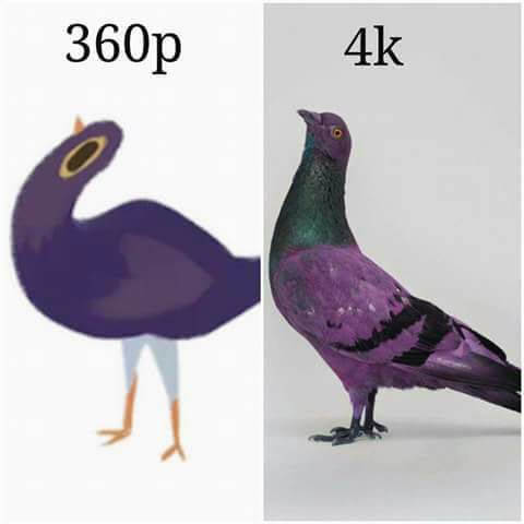 Новый мем - фиолетовый голубь, уничтожает Facebook